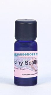 20 - Spiny Scallop